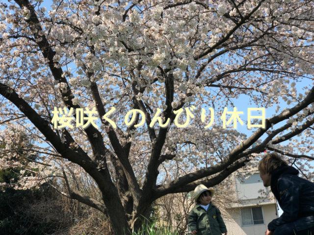 桜咲くのんびり休日