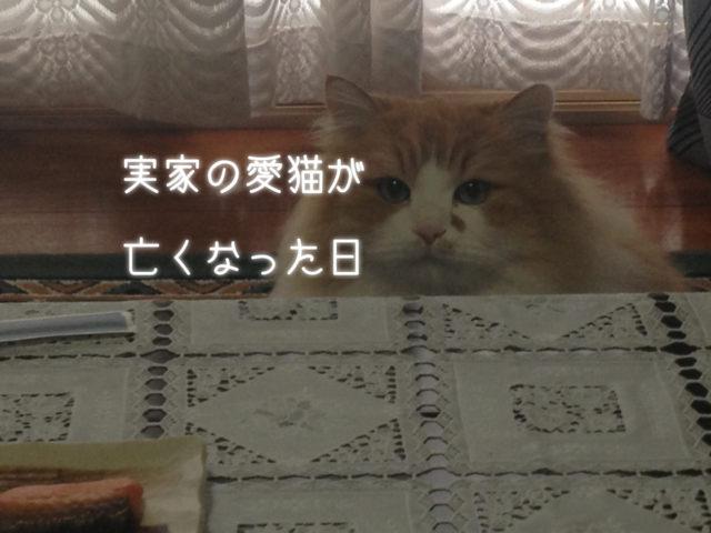 実家の愛猫が亡くなった日